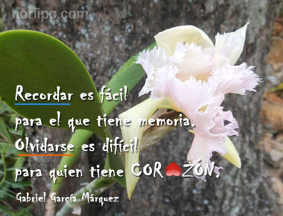 Frases De Gabriel Garcia Marquez Sobre La Vida Y El Amor