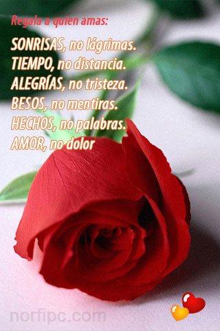 Imagen de amor para el celular: Regala a quien amas: AMOR, no dolor