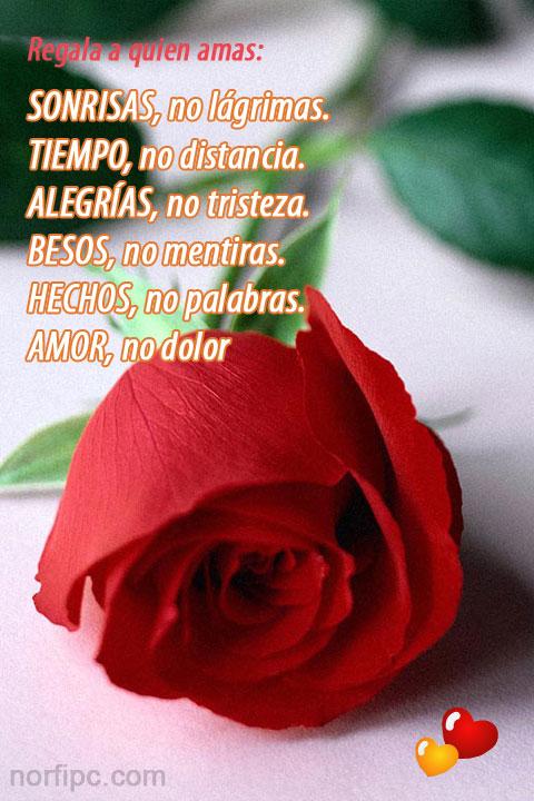 Imagenes De Amor Bonitas Para El Telefono Celular O Tableta