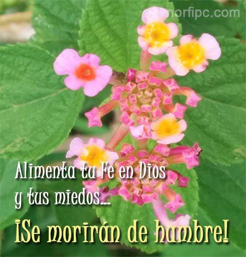 Creer En Dios Frases