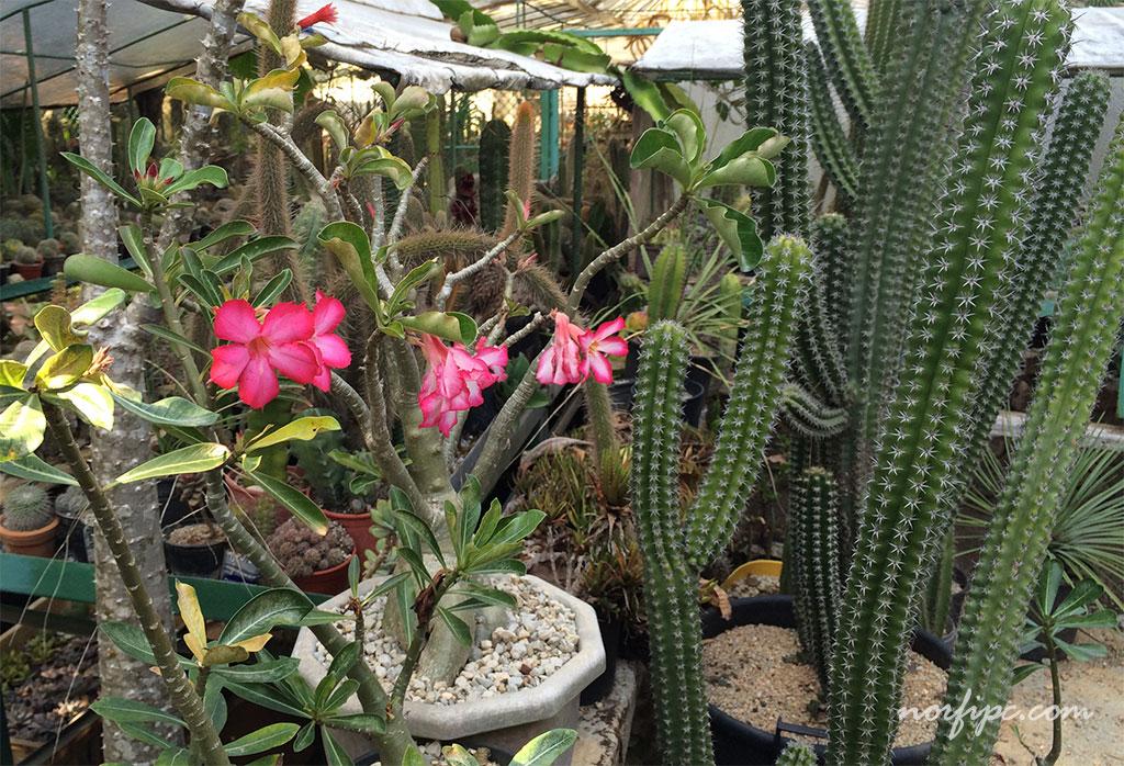 El vivero loter a la mayor colecci n de cactus de cuba - Vivero la rosa del norte ...