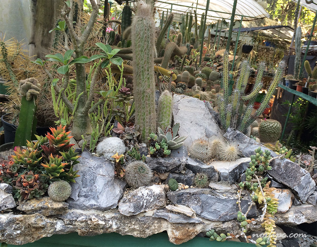 El vivero loter a la mayor colecci n de cactus de cuba for Vivero casa jardin