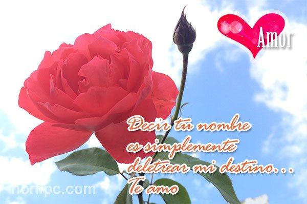Frases De Amor Para El Dia De Los Enamorados O San Valentin