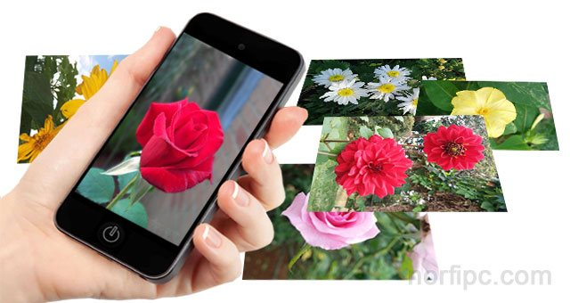 Fondos De Pantalla De Flores Hermosas Para Fondo Celular: Fotos De Flores Y Rosas Para Fondo De Pantalla Del Celular