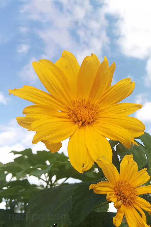 Fotos de flores y rosas para fondo de pantalla del celular for Ver fondos de pantalla