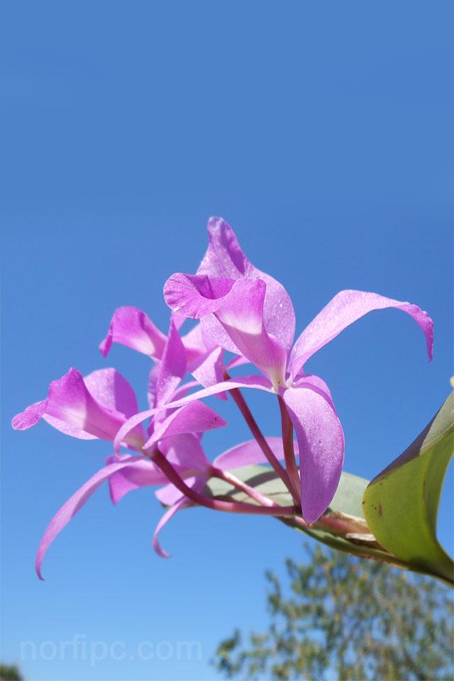 Fotos de flores y rosas para fondo de pantalla del celular for Imagenes bonitas para fondo de pantalla