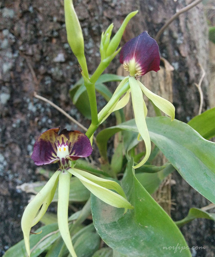 1000 Images About Orquideas On Pinterest Orchids