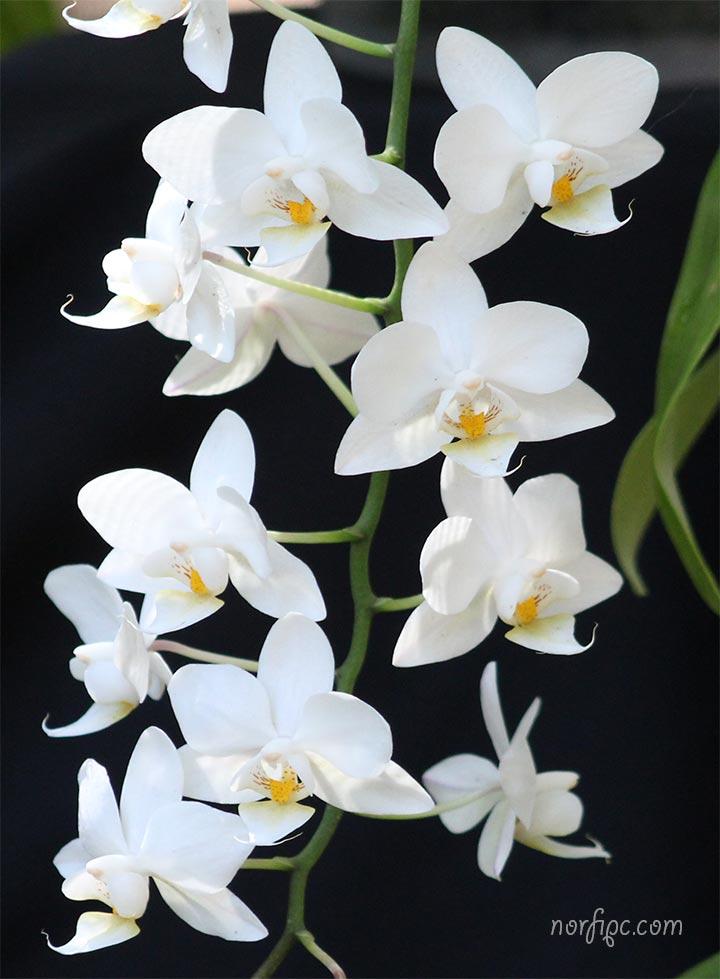 galería de fotos de orquídeas