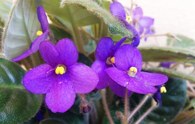 Resultado de imagen para flores violetas