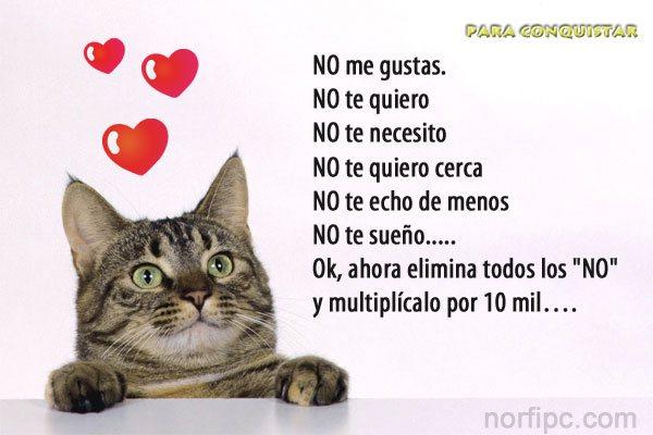 Frases Del Corazón Para Expresar Amor Y Sentimientos En Facebook