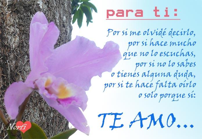 Frases De Amor Para Dedicar A Mi Novia Novio O Relacion