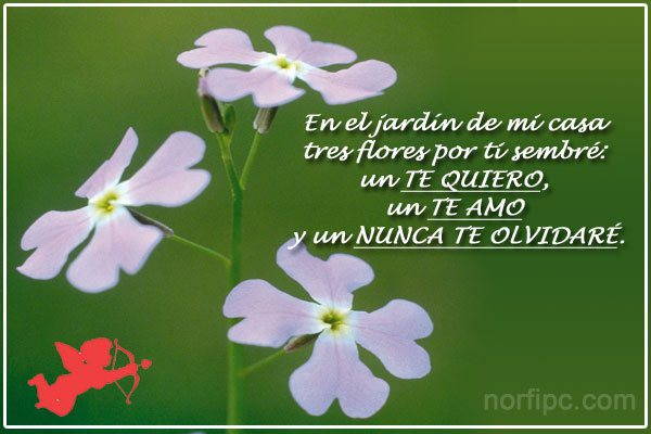 te Quiero Poemas Cortos Poema Cursi de Amor te Quiero