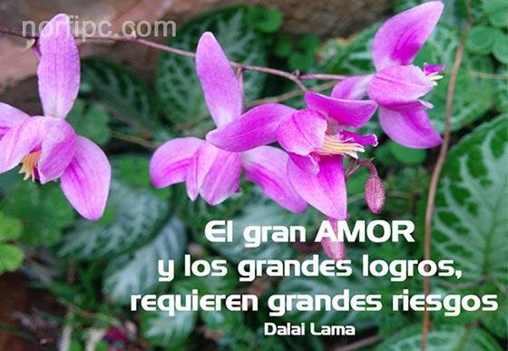 Imagenes Con Frases Celebres Y Ciertas Sobre El Amor