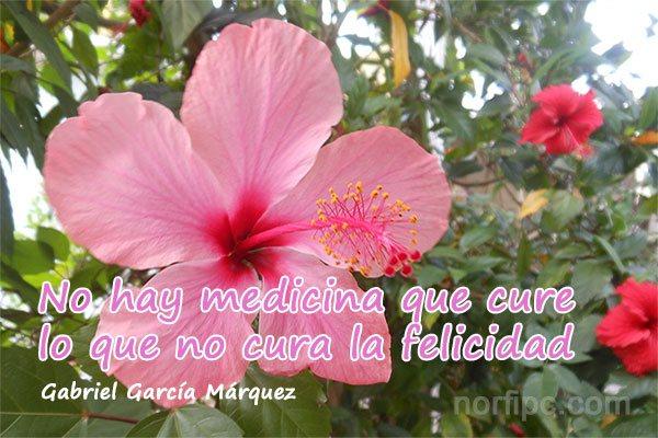 Frase de Gabriel García Márquez sobre la felicidad en la vida