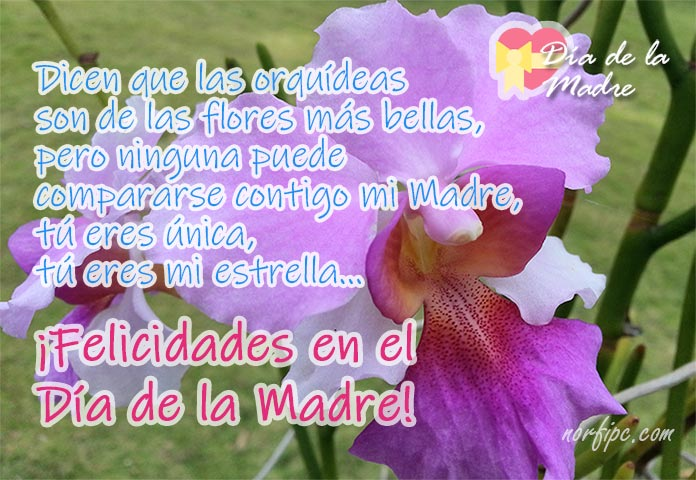 Postales Con Fotos De Orquídeas Dedicadas Para Mi Madre