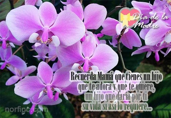 Postales con fotos de Orquídeas para mi Madre