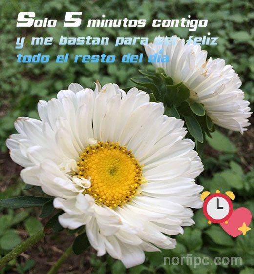 Mensajes Sinceros Y Locos De Amor Para Contarle Que Le Quiero