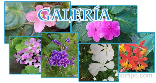 Galer a de fotograf as de flores tropicales - Flores tropicales fotos ...