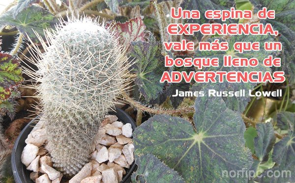 Frase celebre de James Russell Lowell