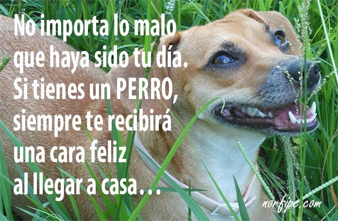 Frases Dedicadas Al Amor De Mi Perro Y Su Fidelidad