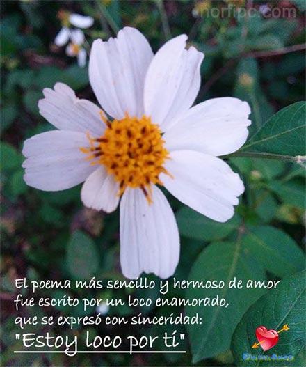 Fotos de flores y rosas con frases para el Día del Amor  Fotos de flores...