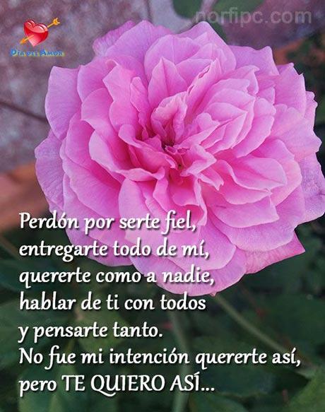 Frases Y Versos Para Dedicar El Día Del Amor