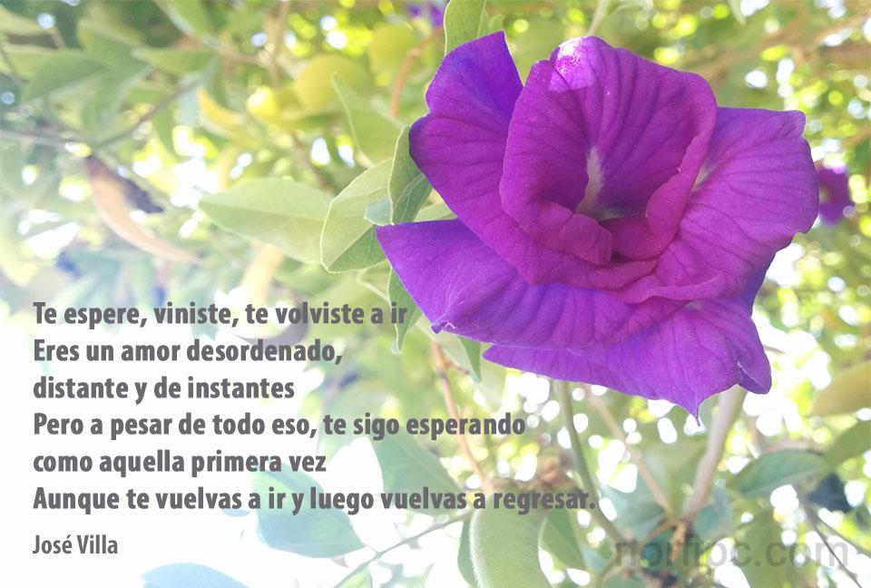 Frases Y Poemas Para Los Que No Pueden Olvidar Y Dejar De Pensar