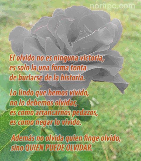 Frases Y Poemas De Desanimo Y Desaliento Por Un Amor Perdido