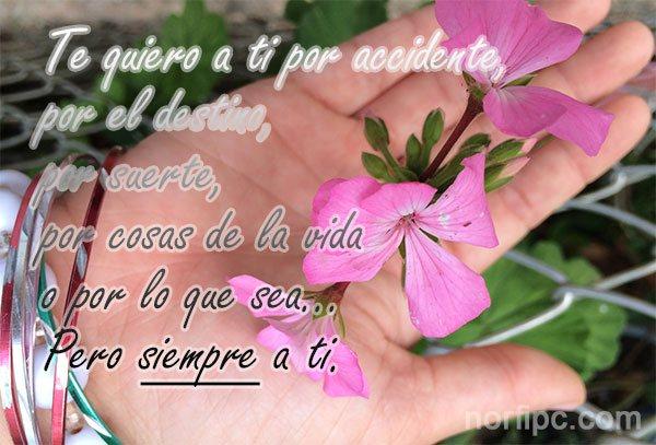 Imagenes de Amor para mi Novia _ Frases Romanticas