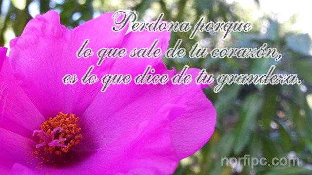 Frases Para Perdonar Y Olvidar Incluso A Quien No Lo Merece