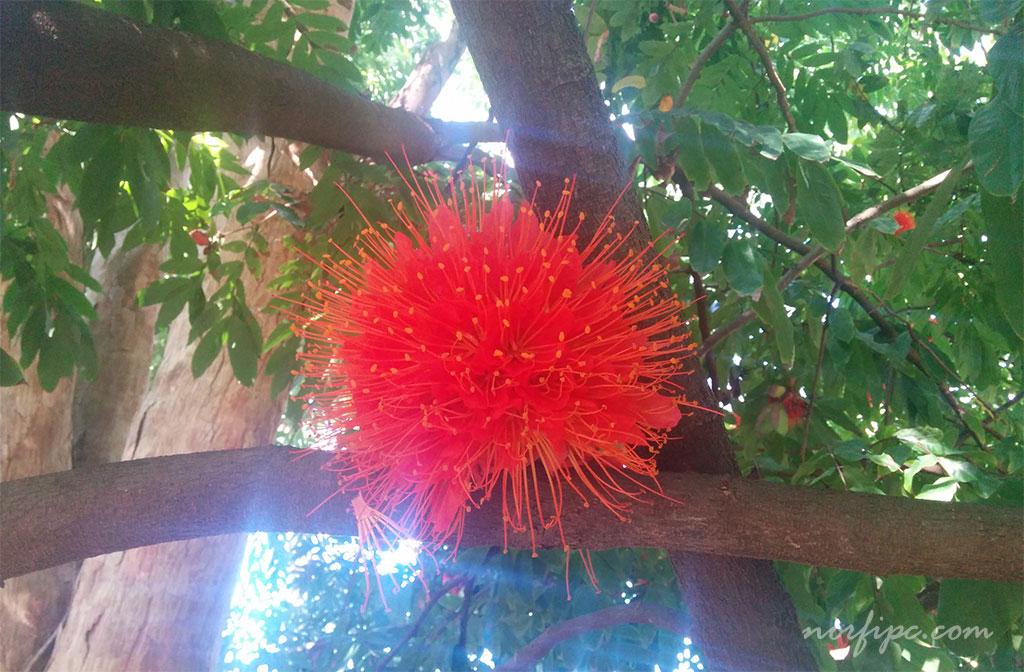 El jard n bot nico de la habana for Arboles y plantas para jardin
