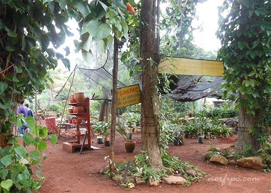 Sitios donde comprar plantas con flores o decorativas en cuba for Viveros ornamentales