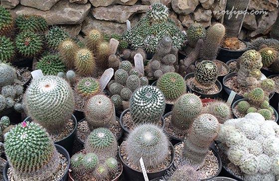 Sitios donde comprar plantas con flores o decorativas en cuba for Vivero de cactus