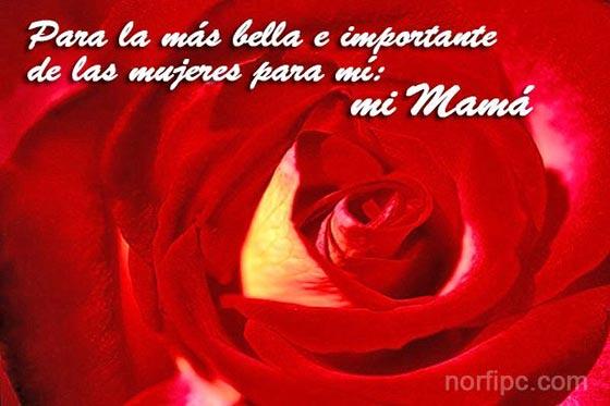 Poemas Para Mama En El DIA De Las Madres