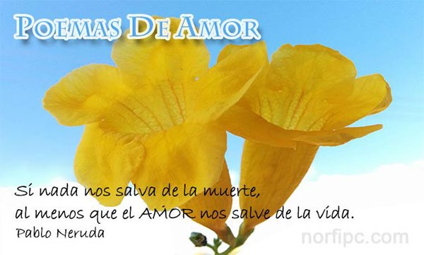 Fotos De Flores Y Rosas Con Frases Para El Día Del Amor